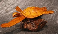 Picture of turtle on wood